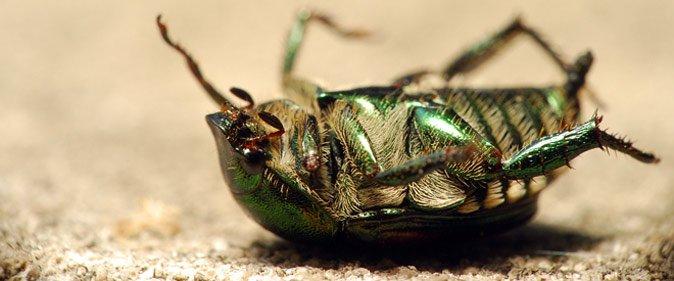 الغبار يقتل حشرة