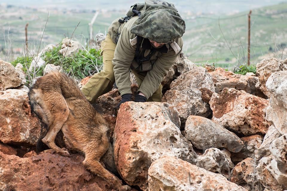 صورة كلب اسرائيل
