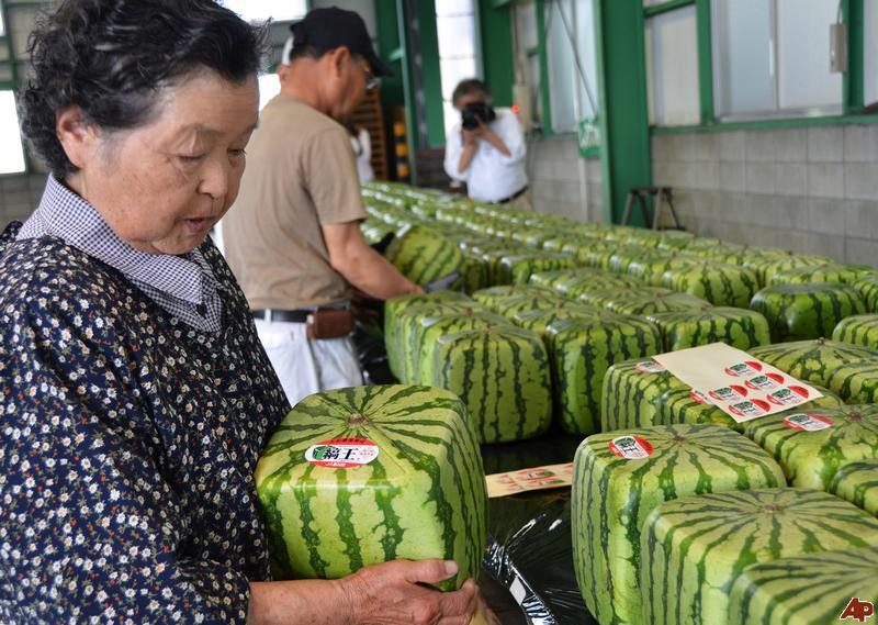 البطيخ اليابانى المكعب