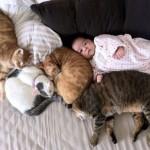 الصداقة بين الاطفال والقطط