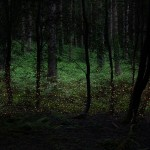 غابات بريطانيا الساحرة