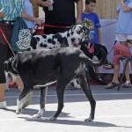 كلب ظريف مشترك