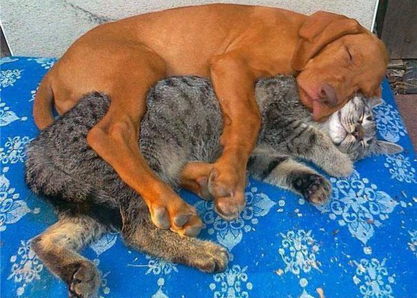 نوم الحيوانات