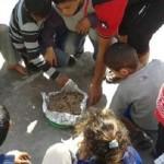 وجبة الأطفال تحتوى فئران ميتة فى غزة