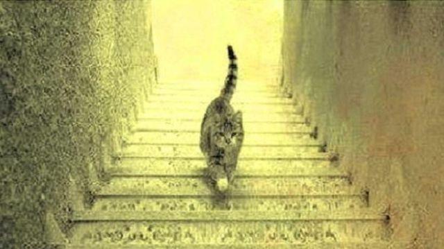 القطة