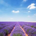 مزارع فرنسا