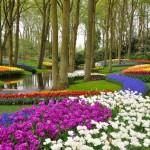 هولندا6