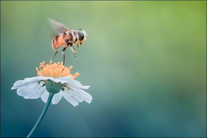 الورد والنحل