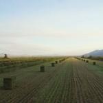 Baling hay, Diamond Valley, Nevada, 2012
