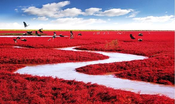 الشاطئ الأحمر – بانجين- الصين