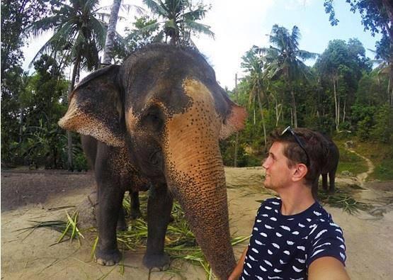 فيل يخطف كاميرا من سائح