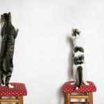 صور القطط