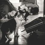 صور القطط  7
