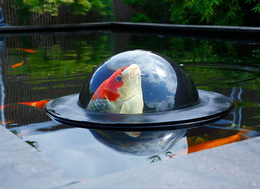 قبعة الاسماك
