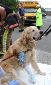 كلب انقاذ 2