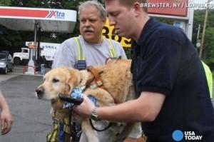 كلب انقاذ