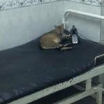 #علشان_لو_جه_ميتفاجئش .. عندنا قطط وتعابين ومياه ملوثة غير صالحة للشرب!!