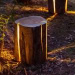 اضاءة من جذع الشجر