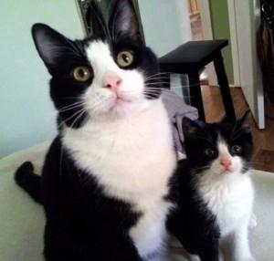 القطة وبنتها