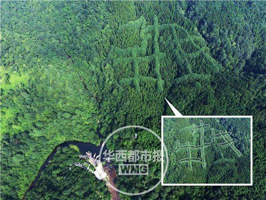 مقطع صيني على النباتات