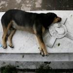 كلب يسكن قبر صاحبه