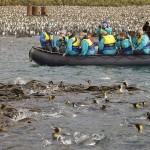 جزيرة ماكورى الاسترالية