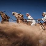 سباق الهجن فى عمان