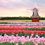 هولندا الساحرة