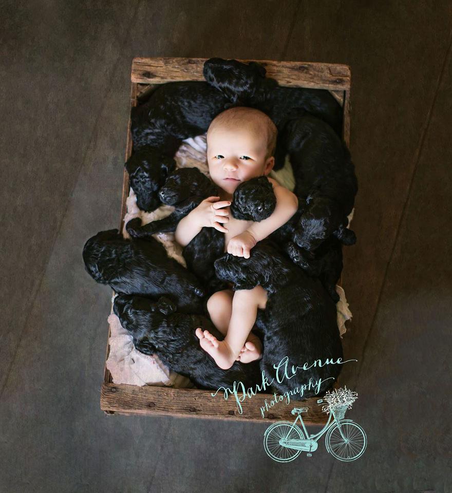 الطفل وكلابه التسعه