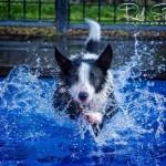 حيوانات تلعب بالماء
