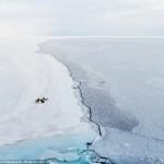 صورة لقطيع من طيور البطريق تتجمع جتمع على صفحة الجليد