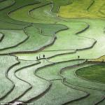 صورة لمزارع الأرز فى محافظة وين باى الفيتنامية