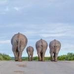 صور الفائزة فى مسابقة الحياة البرية