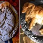 طفولة الكلاب