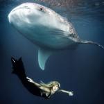 عروس البحر