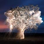 الاشجار المضيئة