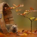 الحيوانات والخريف