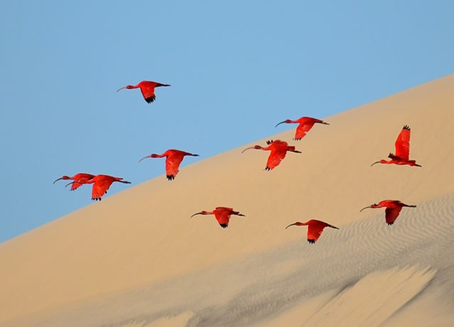 سرب طيور قرب سواحل البرازيل