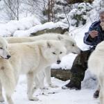 رجل ألمانى عمره 81 عام ويعيش مع الذئاب بمفرده