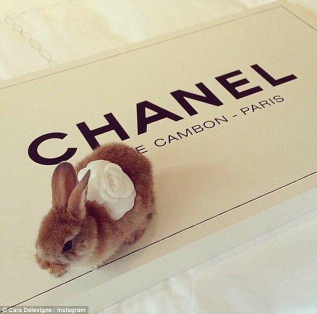 """أرنب كارا ديليفين """"سيسيل"""""""