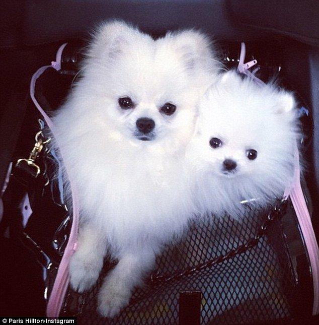 كلاب باريس هيلتون