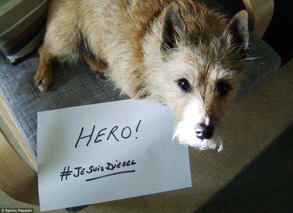 تضامن الكلاب