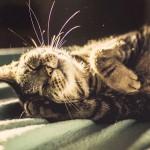 صور مدهشة للقطط