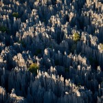 غابة الصخور فى مدغشقر