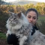 قطط حجم عائلى