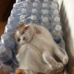 قطط فى اوضاع غريبة