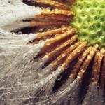 بذور الزهور مع قطرات الندى