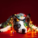 تزيين الكلاب بزينة عيد الميلاد