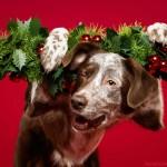 تزيين الكلاب بزينة عيد الميلاد 3