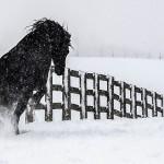 جمال الخيول